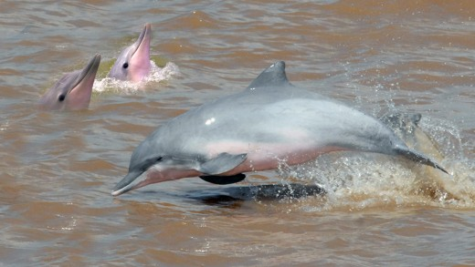 Dolphins en Sunset Tours in Suriname