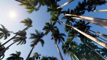 Palmentuin in Suriname