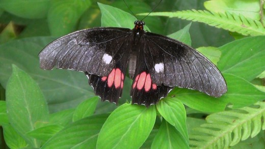 Neotropical Butterfly Park in Suriname