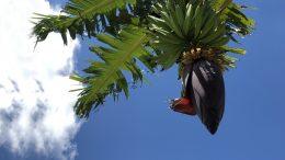 Surinaamse vruchten en- groenten